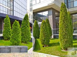 Ваш Садовник. Стрижка и обрезка деревьев, кустарников - photo 5