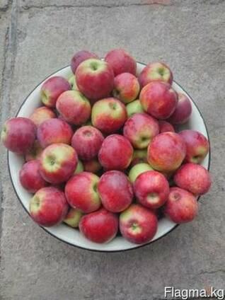 Яблоки рашида