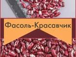 Фасоль Элитная из Киргизии - фото 1