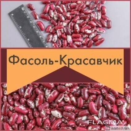 Фасоль Элитная из Киргизии
