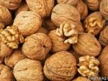 Грецкие орехи - фото 1