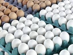 Куриные яйца на экспорт оптом