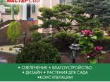 Ландшафтный дизайн, озеленение - photo 1