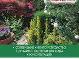 Ландшафтный дизайн, озеленение - photo 7