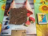 Álnus glutinósa , Семена ольхи, ольха семена, ольха черная семена, семена ольхи клейкой - фото 7