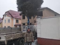 Обрезка обработка деревьев. Станислав