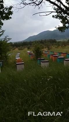 Продается Токтогульский горный мед оптом и в розницу