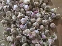 Продам чеснок в большом обьеме