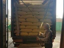 Продам грецкий орех оптом с Украины