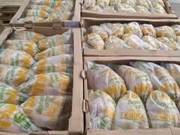 Тушка курицы несушки потрашеная в индивидуальной упаковке или групровой пакет