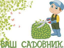 Ваш Садовник. Стрижка и обрезка деревьев, кустарников - photo 1