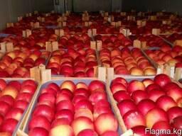 Яблоки Иссыккульский превосход - photo 2