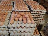 Яйцо куриное оптом - photo 1